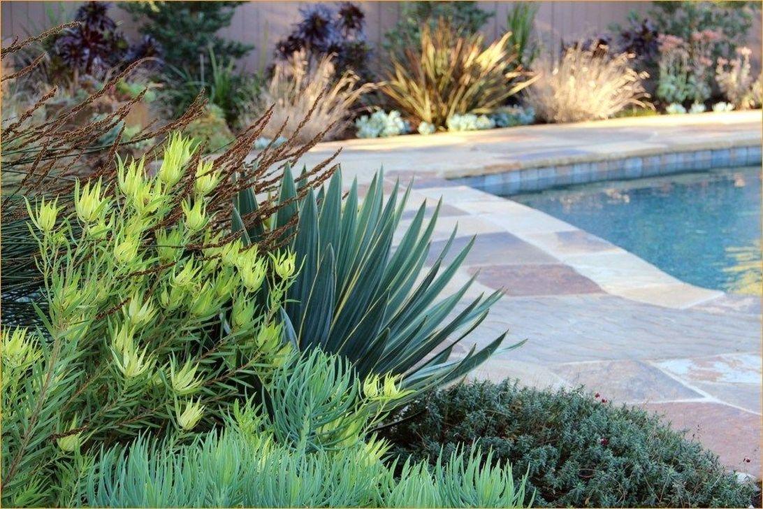 Incredible Cactus Garden Landscaping Ideas Best For Summer 24