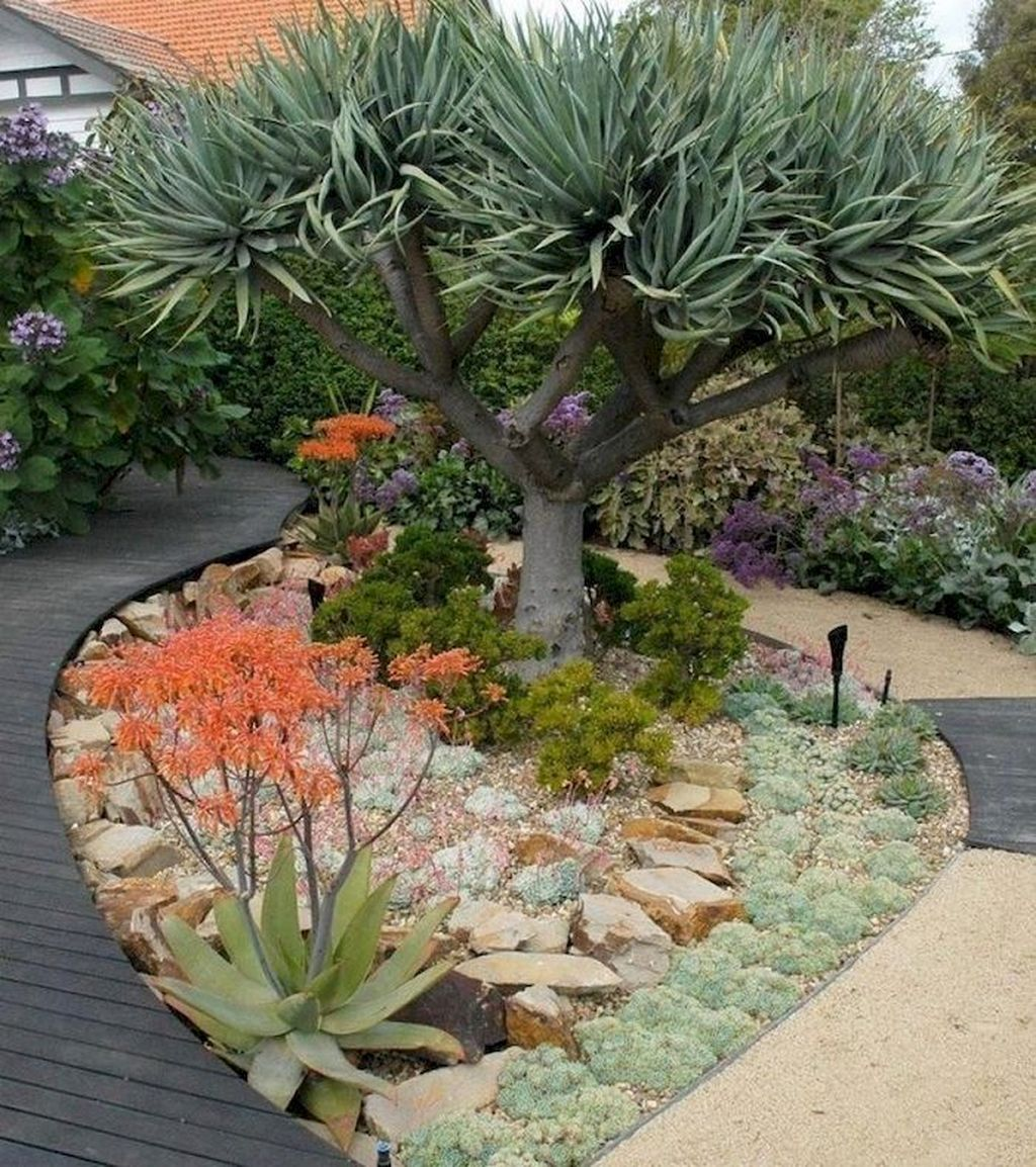 Incredible Cactus Garden Landscaping Ideas Best For Summer ...