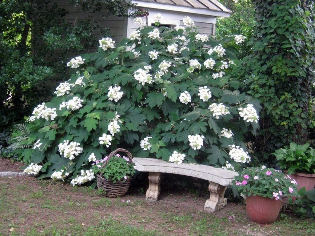 Beautiful Hydrangea Design Ideas Landscaping Your Front Yard 12