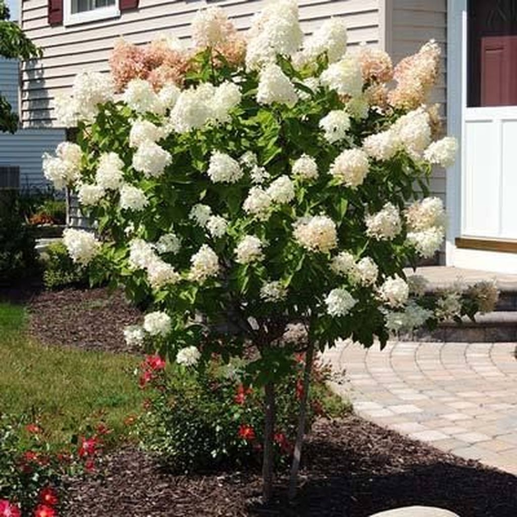 Beautiful Hydrangea Design Ideas Landscaping Your Front Yard 16
