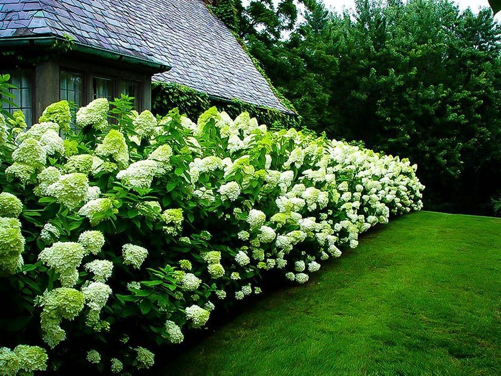 Beautiful Hydrangea Design Ideas Landscaping Your Front Yard 32