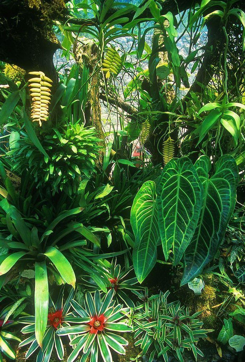 Lovely Tropical Garden Design Ideas 04