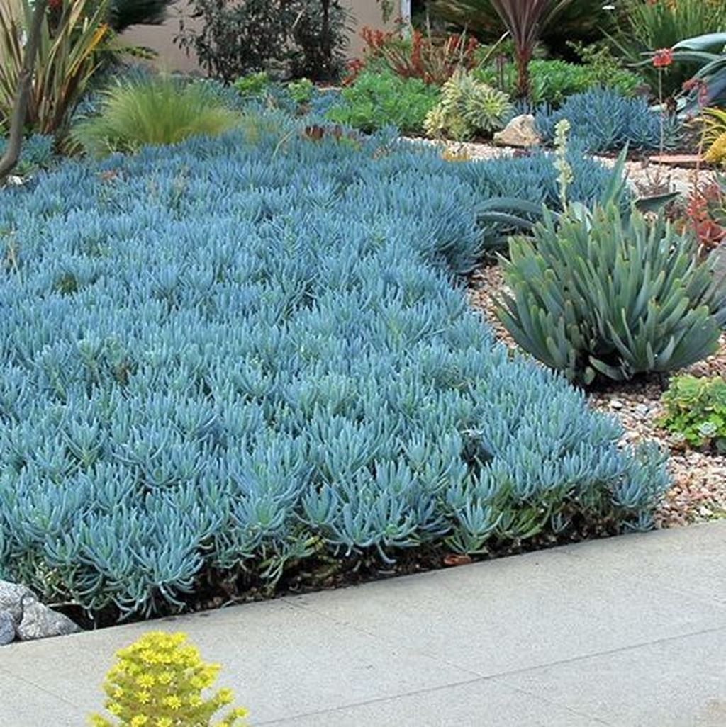Popular Xeriscape Landscape Ideas For Your Front Yard 06