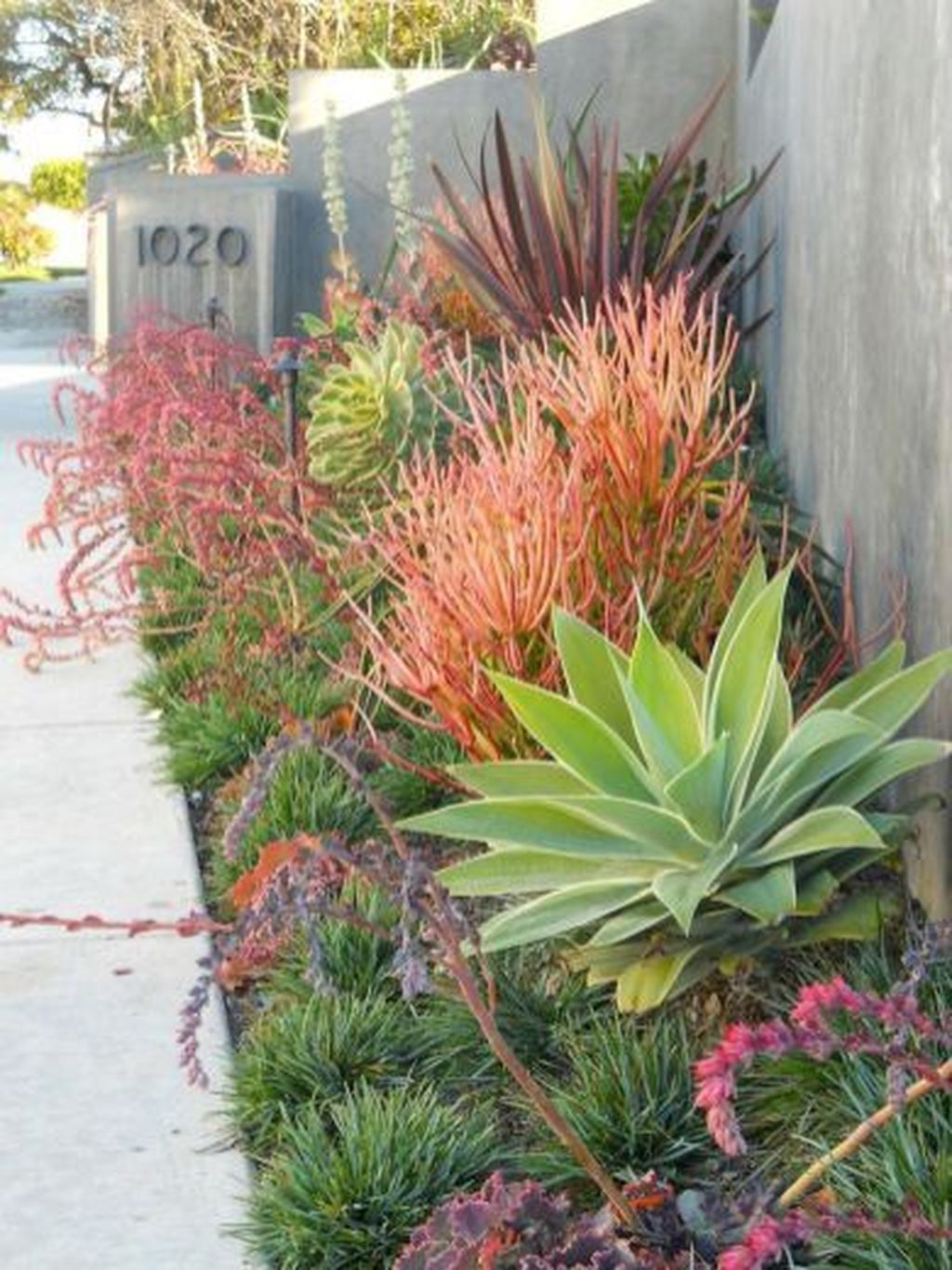 Awesome Succulent Front Yard Landscaping Ideas 29