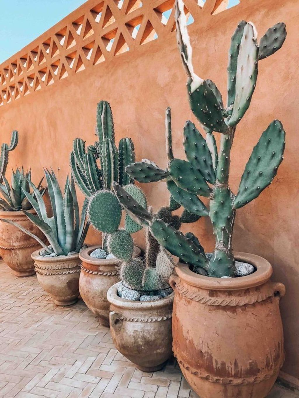 Beautiful Cactus Landscaping Ideas For Your Front Yards Decor 17