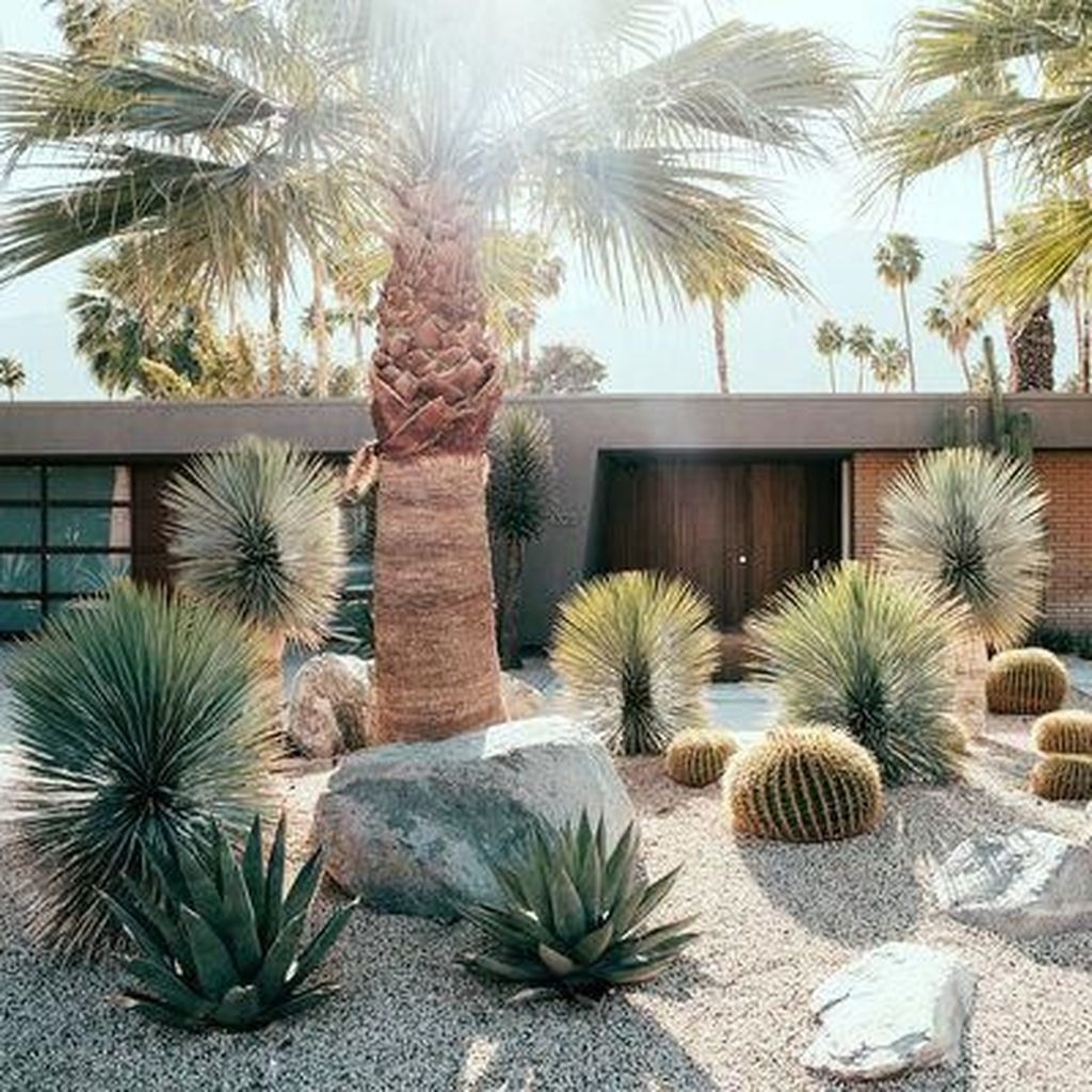 Beautiful Cactus Landscaping Ideas For Your Front Yards Decor 25