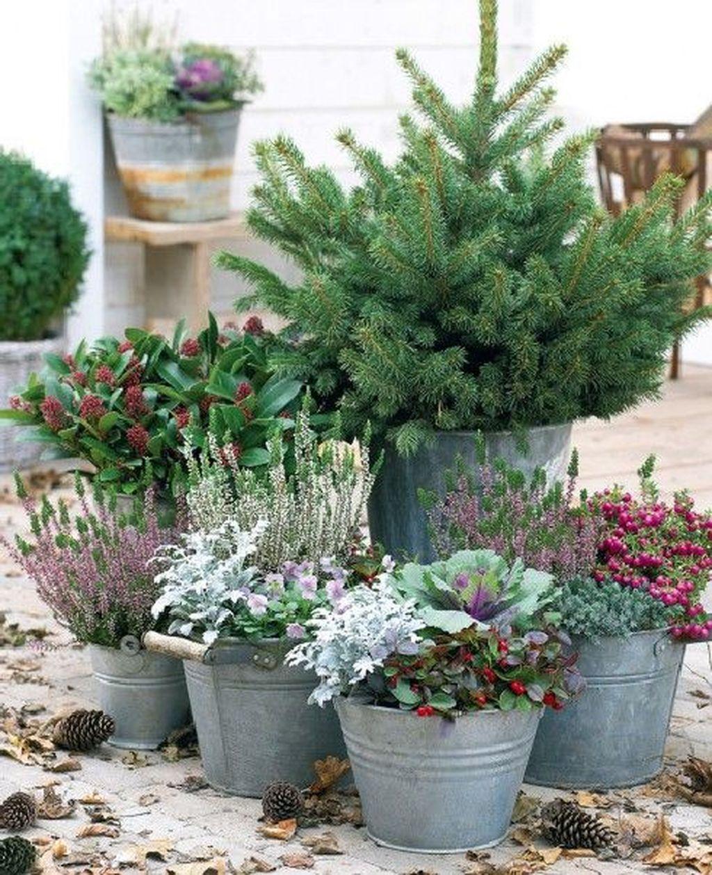Inspiring Winter Container Gardening Ideas 05