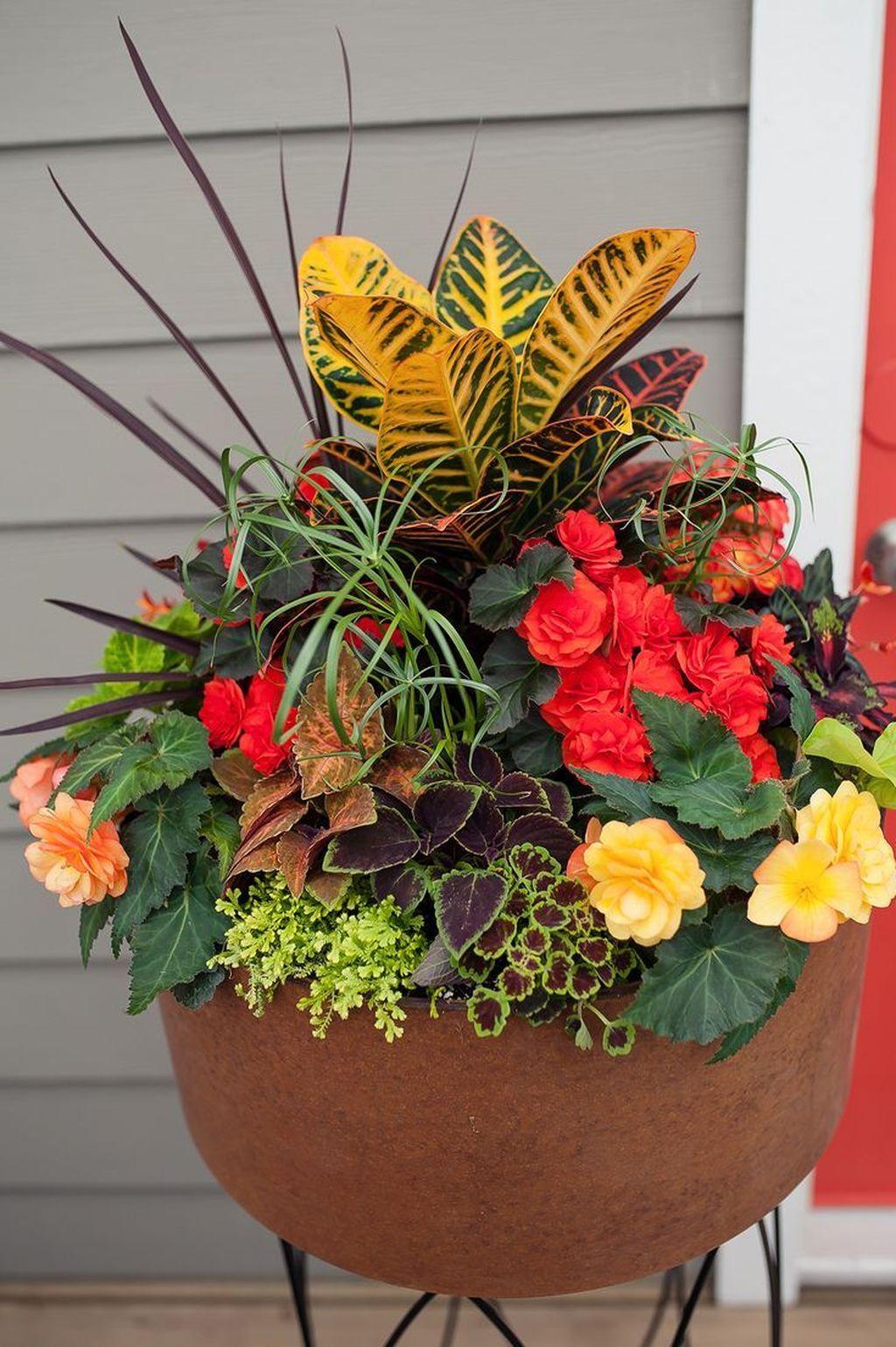 Inspiring Winter Container Gardening Ideas 17