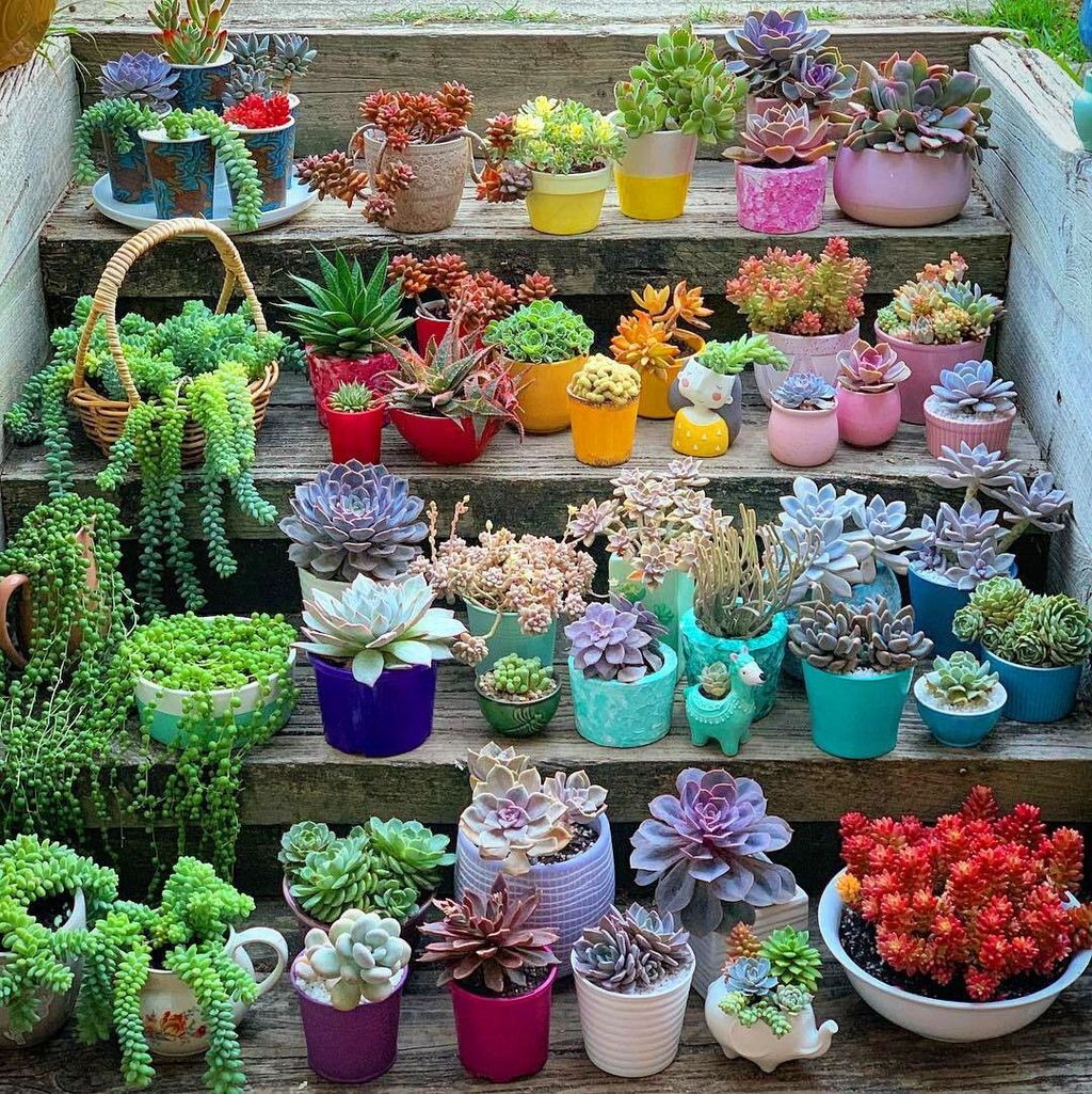 Beautiful Outdoor Succulent Planter Ideas 01