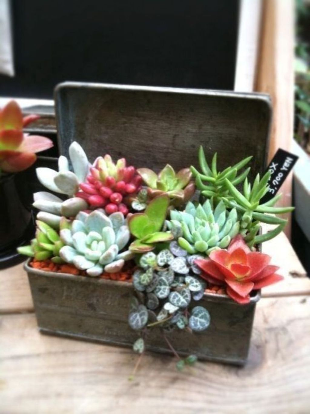 Beautiful Outdoor Succulent Planter Ideas 05