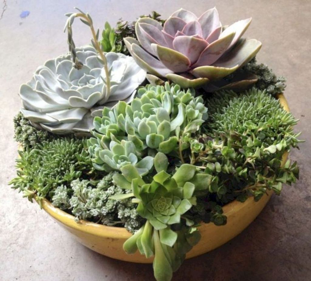Beautiful Outdoor Succulent Planter Ideas 07