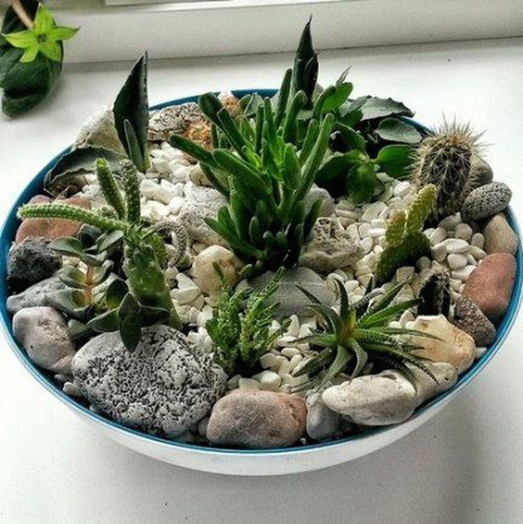 Inspiring Indoor Garden Succulent Ideas 06