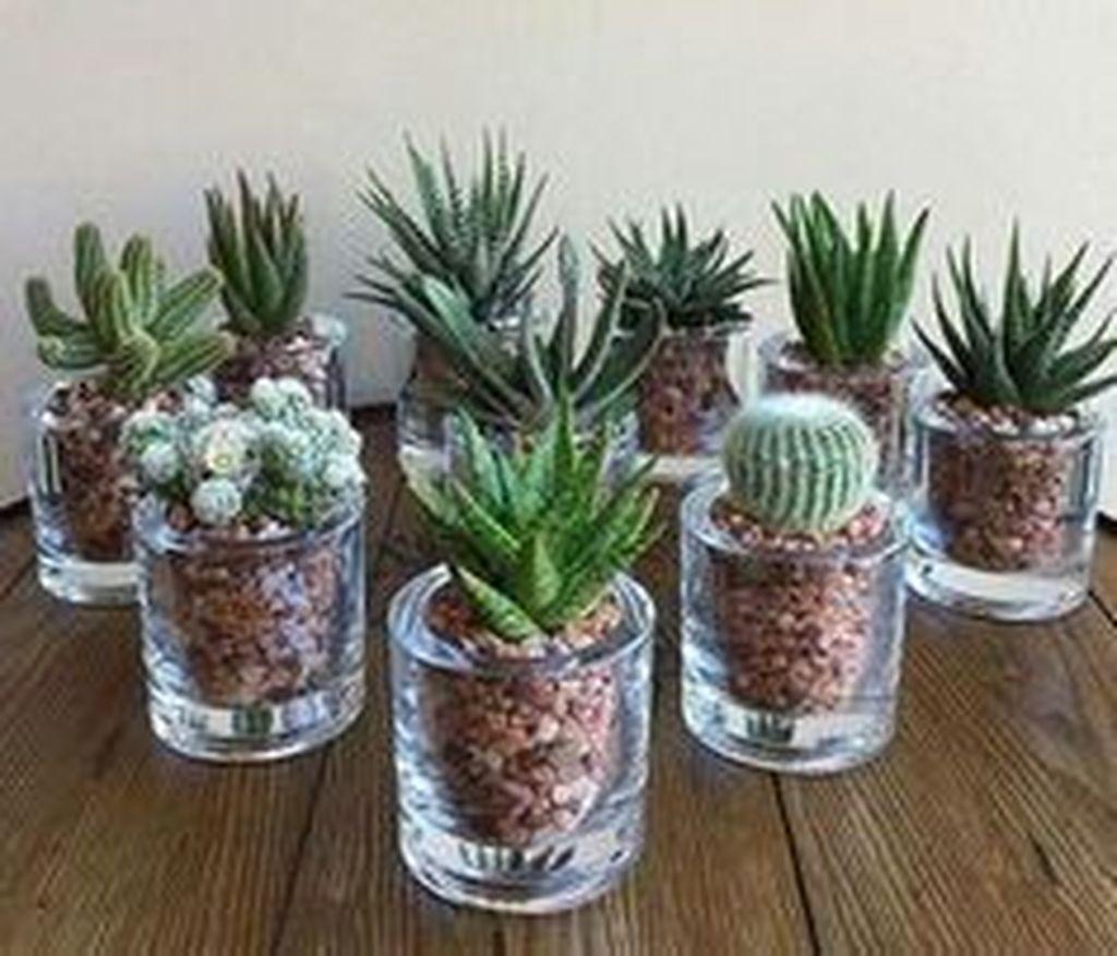 Inspiring Indoor Garden Succulent Ideas 09