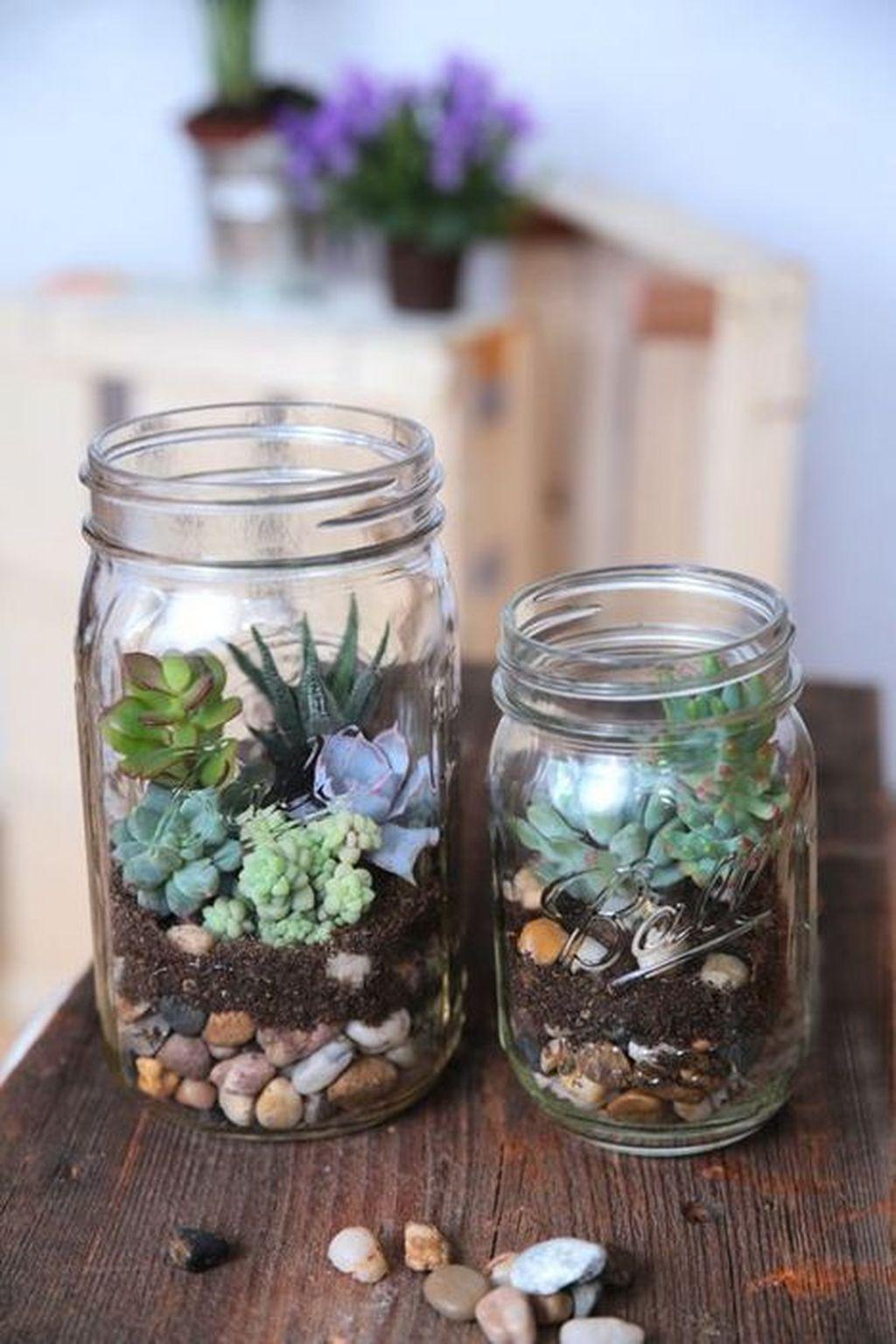 Inspiring Indoor Garden Succulent Ideas 20