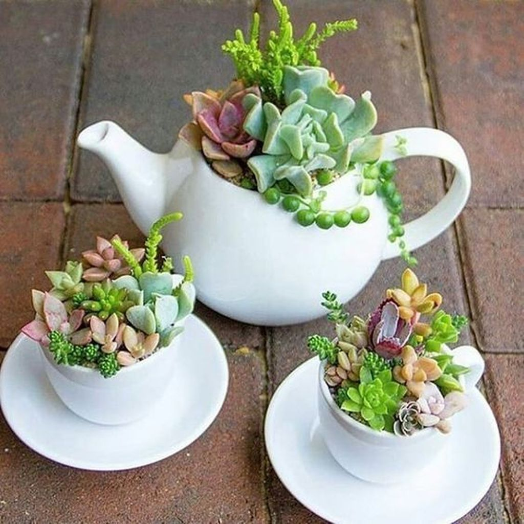 Inspiring Indoor Garden Succulent Ideas 25