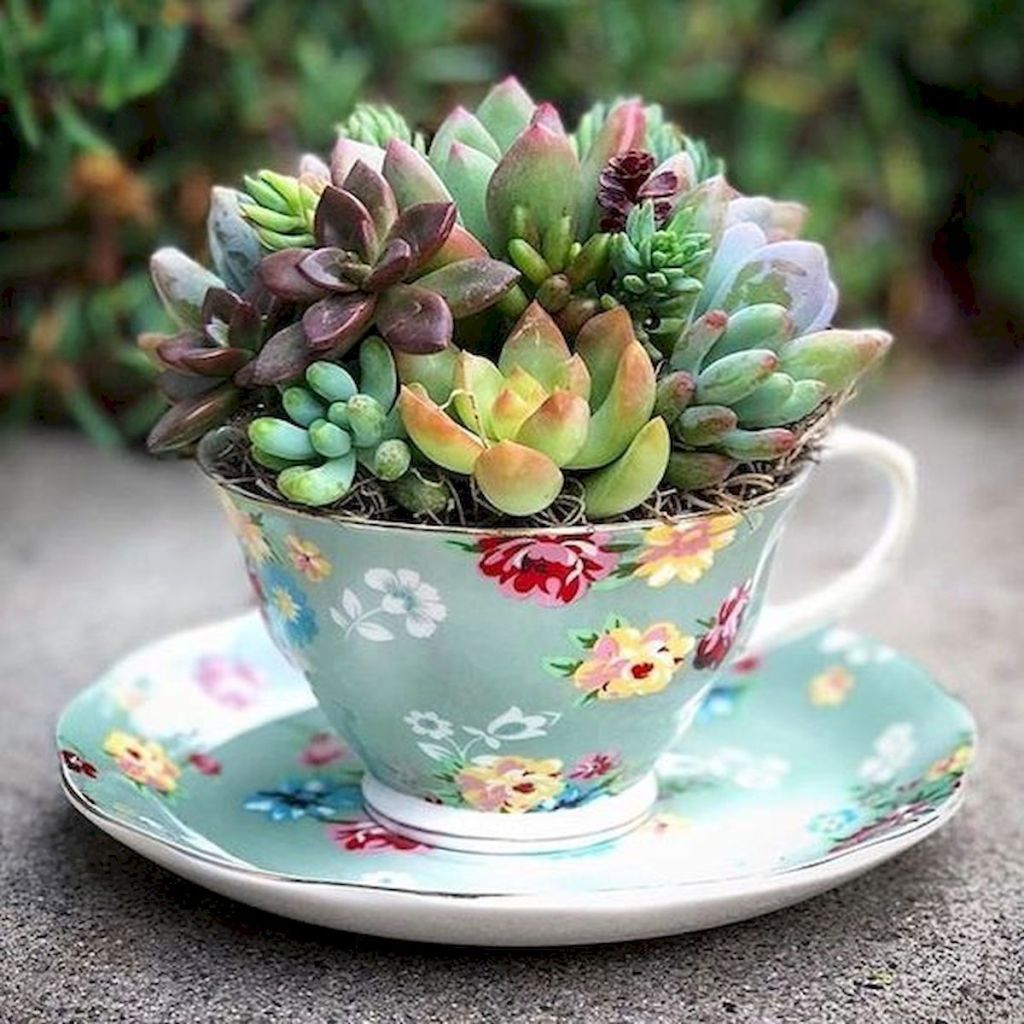 Inspiring Indoor Garden Succulent Ideas 29