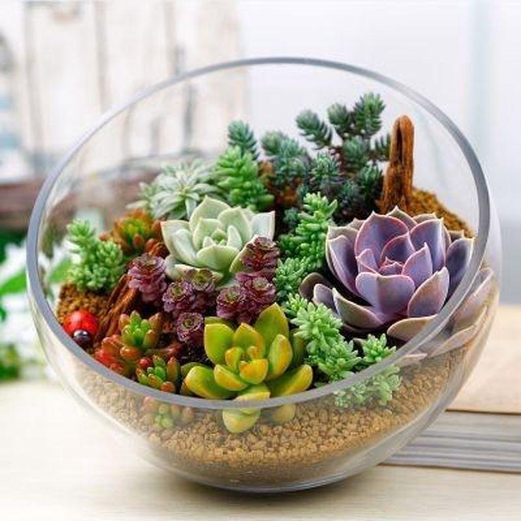 Inspiring Indoor Garden Succulent Ideas 30