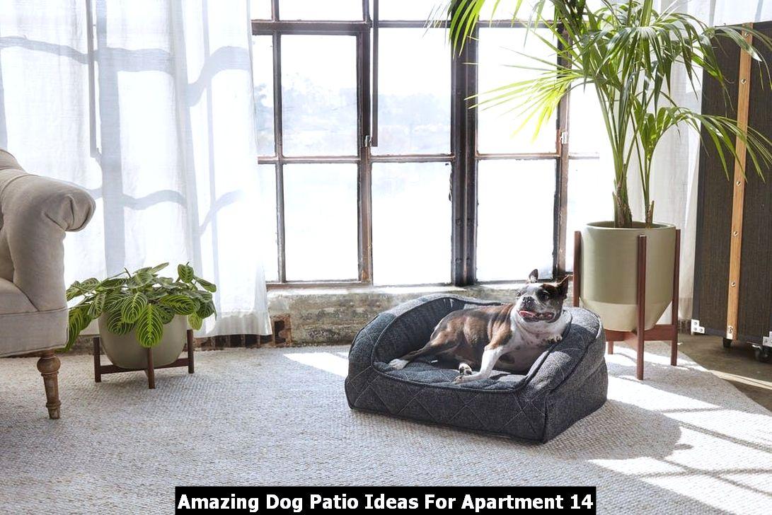 Amazing Dog Patio Ideas For Apartment 14