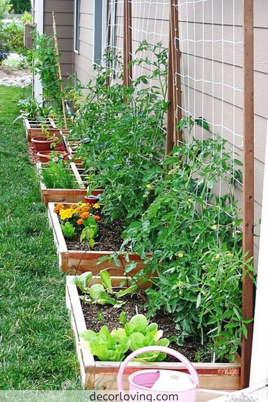 20 Backyard Vegetable Garden Ideas Magzhouse