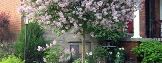 Best Small Trees For Front Yard