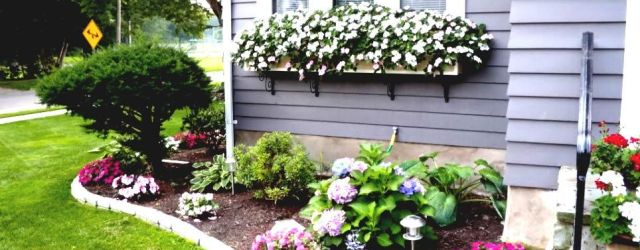 Flower Ideas For Front Yard
