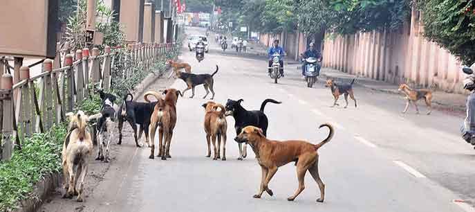 सीतापुरात हल्लेखोर कुत्र्यांचा कहर…
