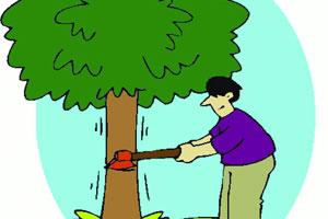 भोसरीच्या चार रस्त्यासाठी 142 झाडांवर कु-हाड
