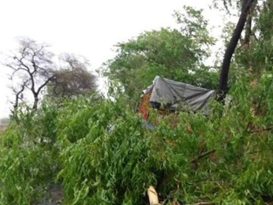 झाडाची फांदी डोक्यावर पडून वृद्ध महिलेचा मृत्यू