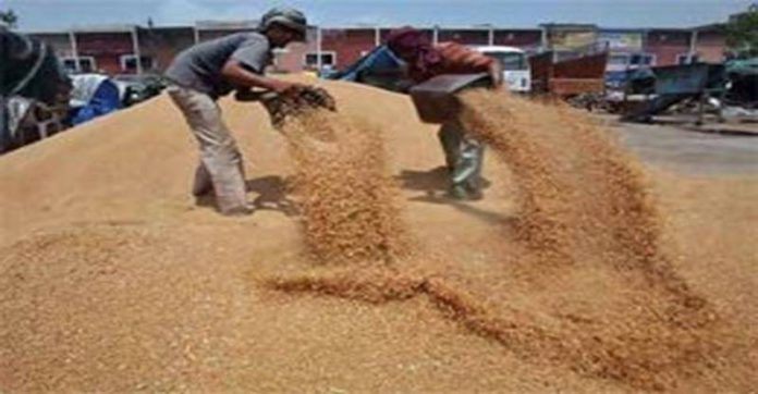 गव्हाचे भाव पडल्याने बिहारमधील शेतकरी अडचणीत; मदतीची मागणी