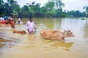 केरळमध्ये पावसाचे थैमान; 19 जणांचा मृत्यू