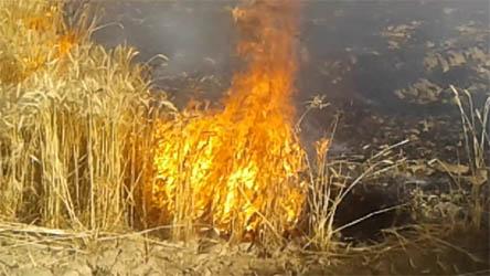 गेहूं के खेत में लगी आग, 15 बीघा फसल जलगर हुई खाक