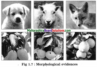 Maharashtra Board Class 10 Science Solutions Part 2 Chapter 1 Heredity and Evolution 8