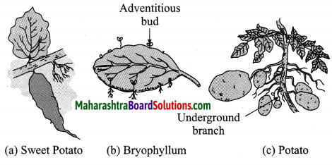 Maharashtra Board Class 10 Science Solutions Part 2 Chapter 2 Life Processes in Living Organisms Part - 2, 10
