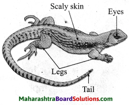 Maharashtra Board Class 10 Science Solutions Part 2 Chapter 6 Animal Classification 11