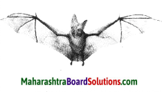 Maharashtra Board Class 10 Science Solutions Part 2 Chapter 6 Animal Classification 25