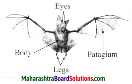 Maharashtra Board Class 10 Science Solutions Part 2 Chapter 6 Animal Classification 26