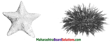 Maharashtra Board Class 10 Science Solutions Part 2 Chapter 6 Animal Classification 27
