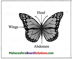 Maharashtra Board Class 10 Science Solutions Part 2 Chapter 6 Animal Classification 5