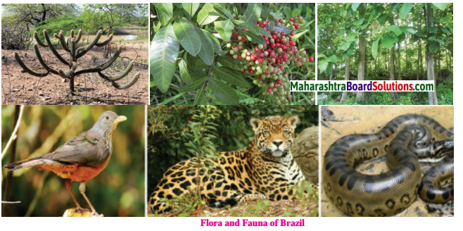 Maharashtra Board Class 10 Geography Solutions Chapter 5 Natural Vegetation and Wildlife 20