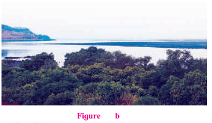 Maharashtra Board Class 7 Geography Solutions Chapter 3 Tides 10