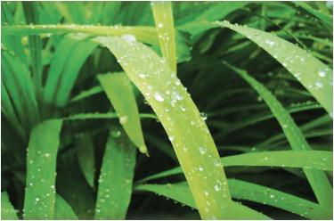 Maharashtra Board Class 9 Geography Solutions Chapter 5 Precipitation 8