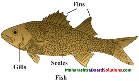 Maharashtra Board Class 7 Science Solutions Chapter 1 The Living World Adaptations and Classification 2