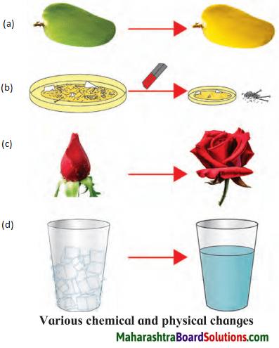 Maharashtra Board Class 7 Science Solutions Chapter 13 Changes - Physical and Chemical 1.1