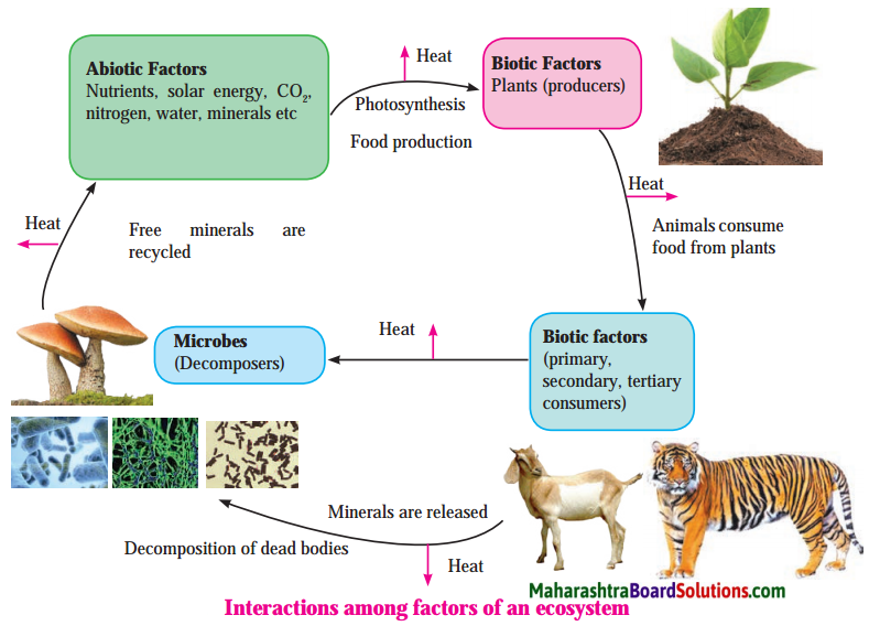 Maharashtra Board Class 8 Science Solutions Chapter 18 Ecosystems 11