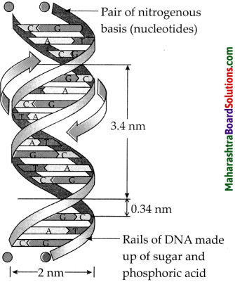 Maharashtra Board Class 9 Science Solutions Chapter 16 Heredity and Variation 8