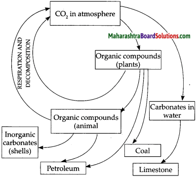 Maharashtra Board Class 9 Science Solutions Chapter 7 Energy Flow in an Ecosystem 13