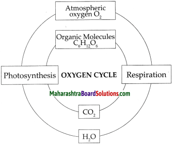 Maharashtra Board Class 9 Science Solutions Chapter 7 Energy Flow in an Ecosystem 14