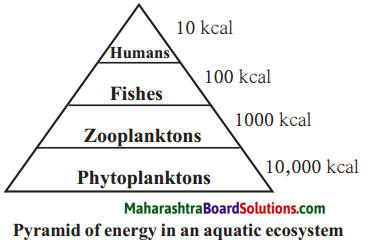 Maharashtra Board Class 9 Science Solutions Chapter 7 Energy Flow in an Ecosystem 2