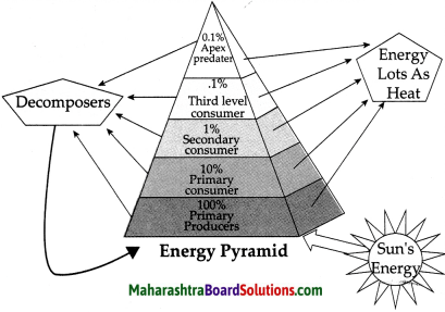 Maharashtra Board Class 9 Science Solutions Chapter 7 Energy Flow in an Ecosystem 20