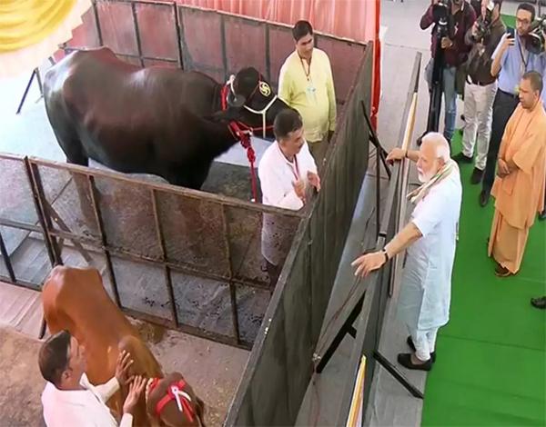 Master - national animal disease control programme: पंतप्रधान मोदींनी वेचला कचरा, केली गोसेवा  in uttar pradesh launches national animal disease control programme